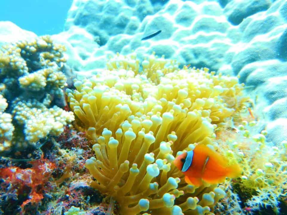 Cebu Philippines scuba