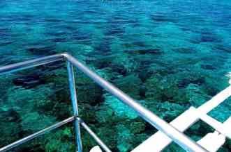 Snorkeling the Visayas