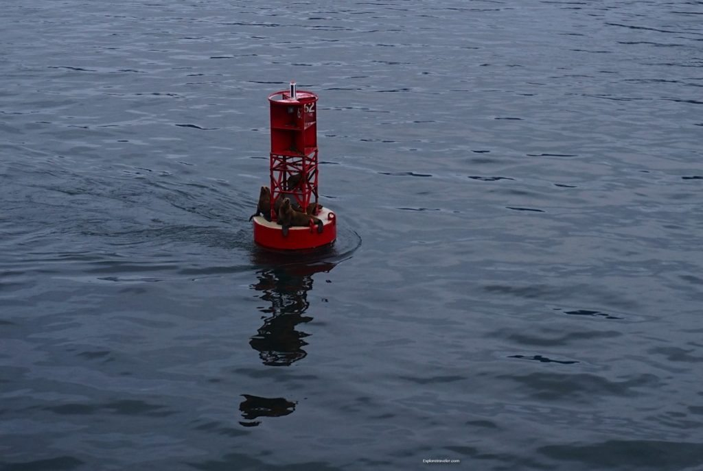 """Photo of the day ~ """"Seals playing on the Buoy in Alaska"""""""