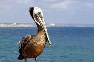 Beautiful Birds From Around The World 20