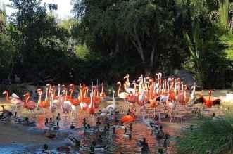 Jurong Bird Park: Singapore's Flamingo Lake 9