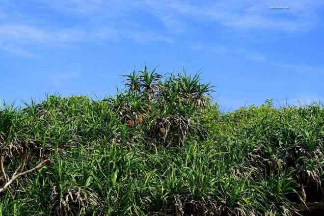 sanxiantai dragon bridge island plants