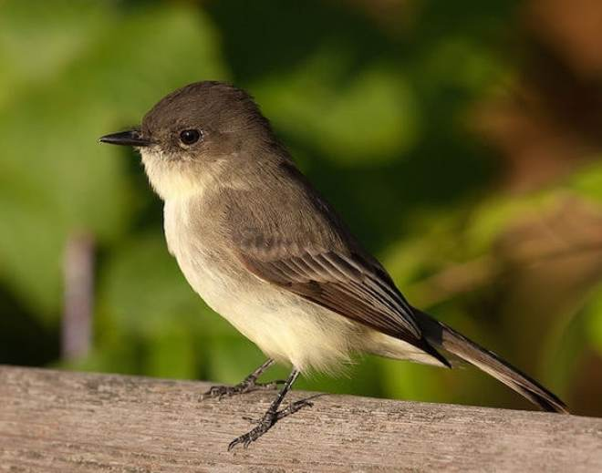 My Alaska Hiking Blog of the Far North - A small bird perched on top of a wooden branch - Bird
