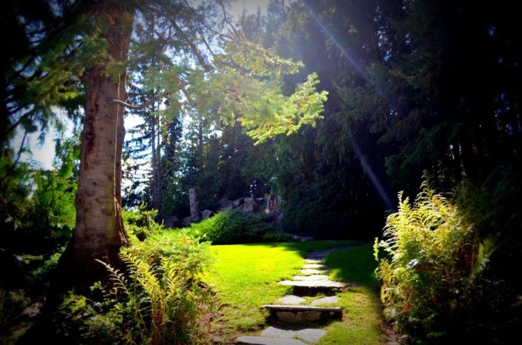 Ohme Gardens - Lawn with sun streaming through