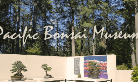 Pacific Bonsai Museum – The Most Diverse Collection In North America!