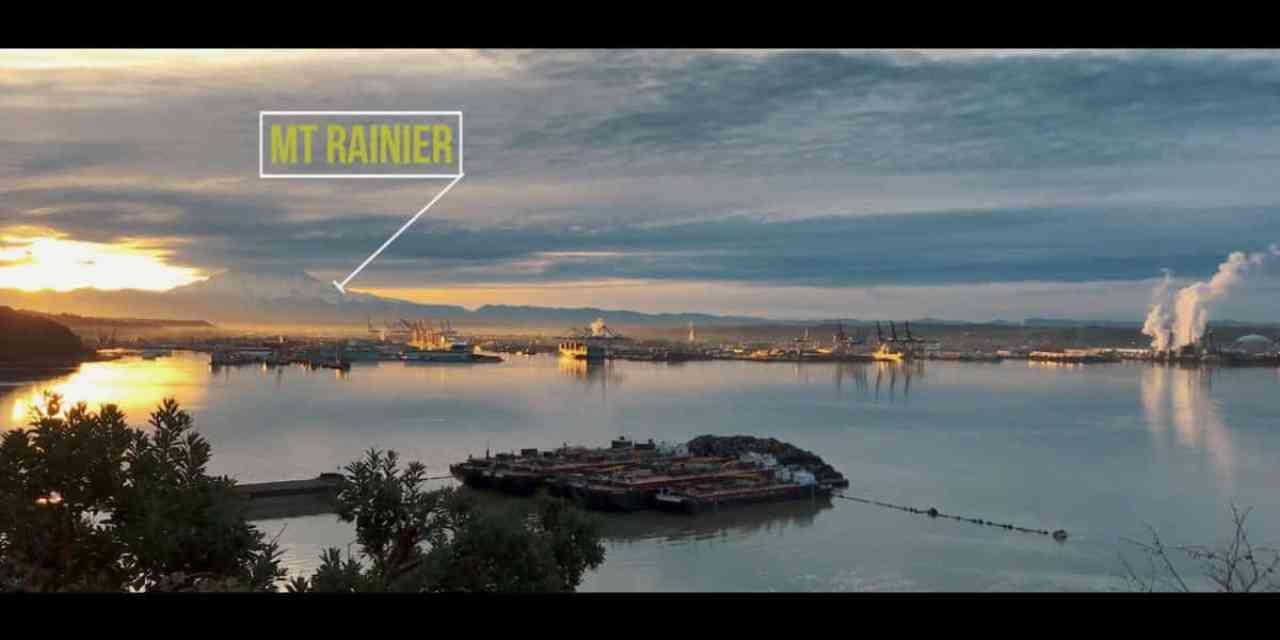 Sea Lion Sunrise in Tacoma