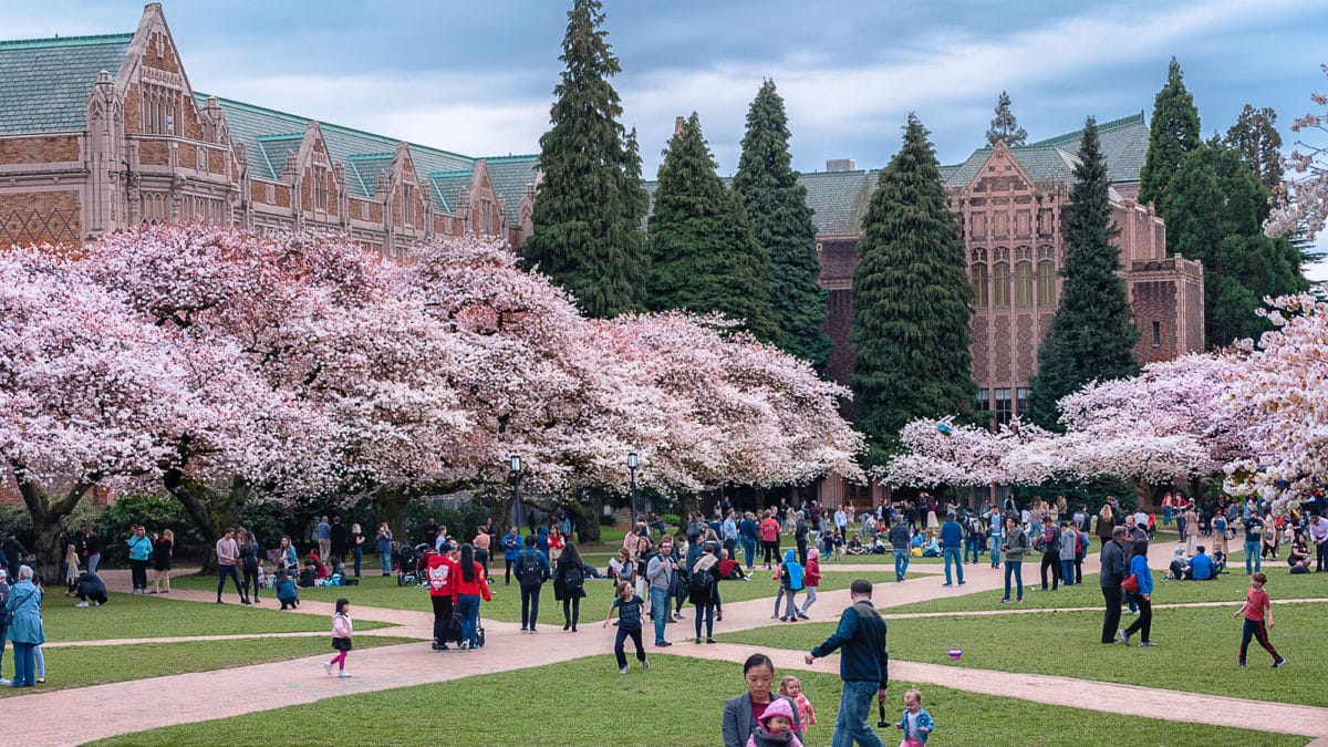 Cherry Blossoms In Seattle 2018 Explore Washington State