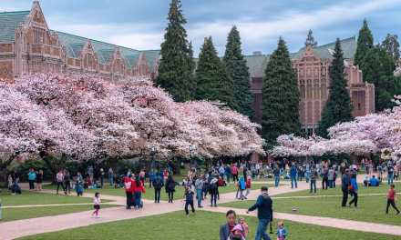 Cherry Blossoms in Seattle – 2018