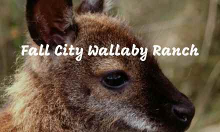 The Fall City Wallaby Ranch