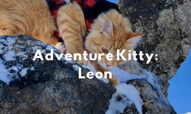 Adventure Kitty: Leon