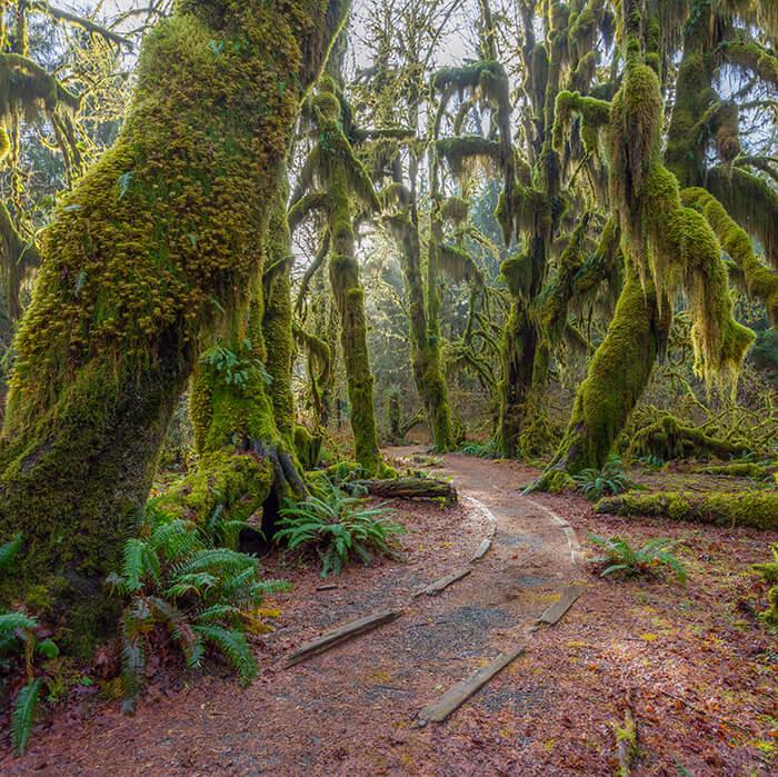 Washington State Rain Forest camping in Washington State