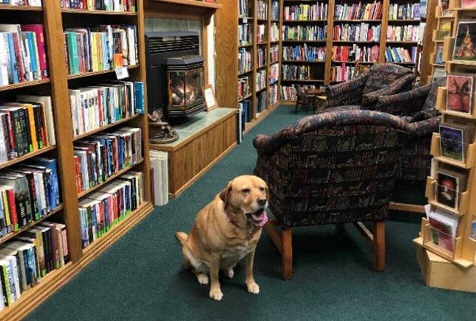 Time Enough Books Illwaco Washington Dog Scout
