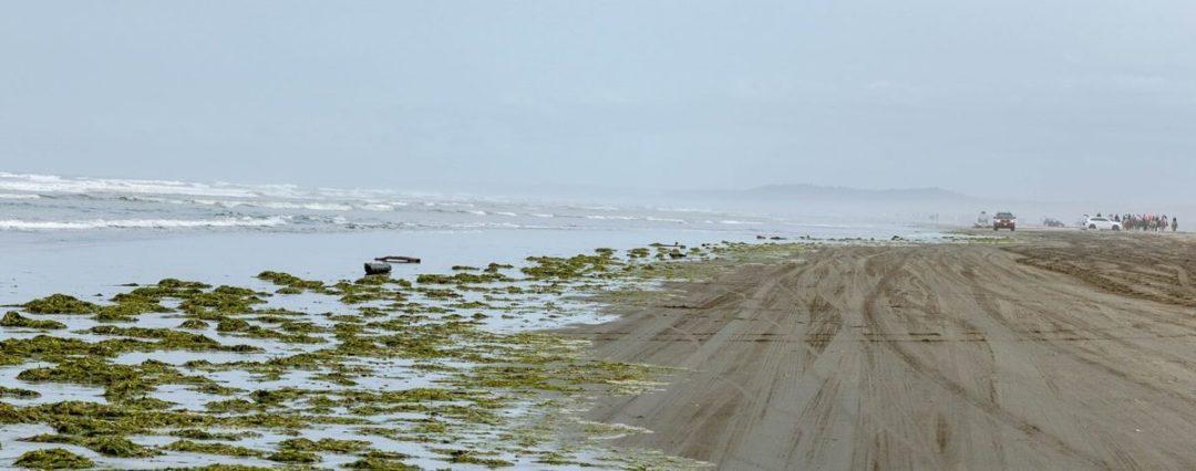 View of the beach at Ocean Shores Washington