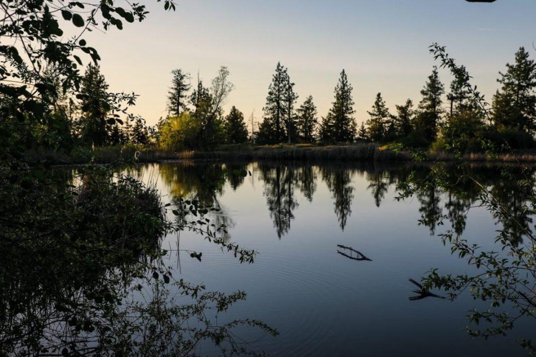 pond-lincoln-park