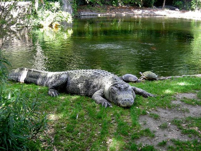 aligator-202383_640.jpg