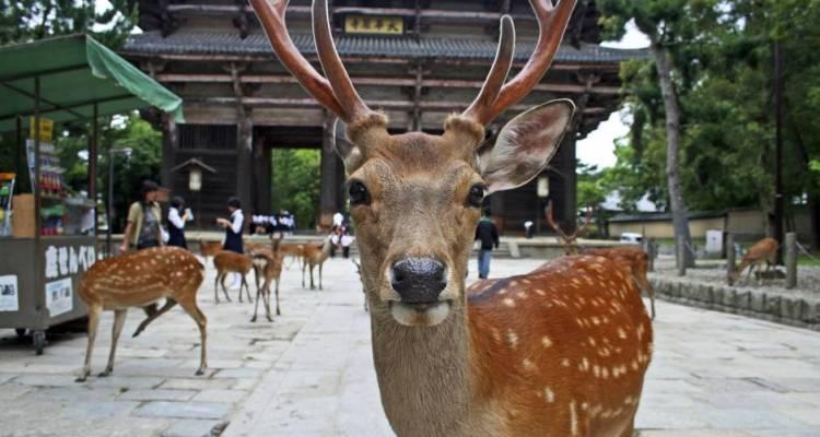 Nara – what to visit