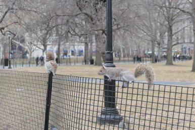 Squirrels in Battery Park