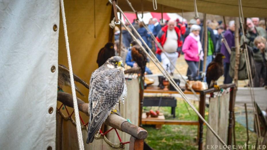 Birds of prey, Ludlow Medieval Christmas Fayre
