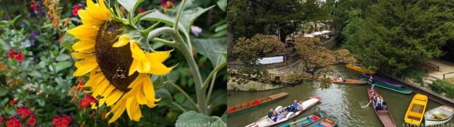 Flowers in Oxford Botanic Garden