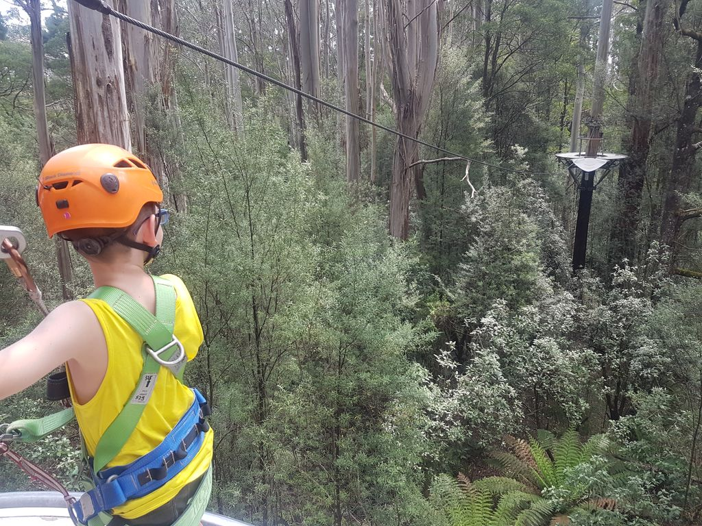 Otway Fly Treetop Adventures - Caius is ready