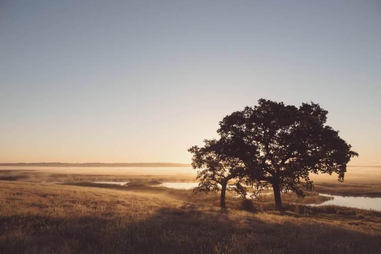 Elmley-Nature-Reserve-Sunrise-Tuesday-30th-June-2015-150