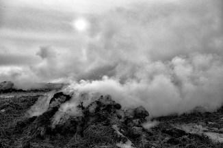 Dramatic flax burn_reduced