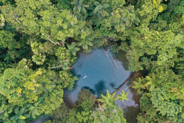 swimming in the daintree national park