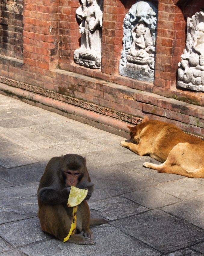Swayambhunath Temple Monkey Temple Exploring Kiwis Kathmandu Nepal