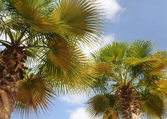 Waldorf Astoria Palm Dubai Privilee