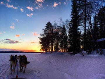 Rovaniemi, Finnish Lapland, Bearhill Husky, dog sledding review