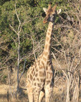 Overlanding Africa