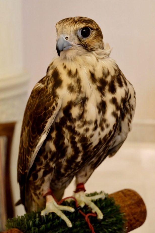 Shangri-La Hotel, Doha falcon in lobby