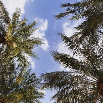 Doha city skyline palm trees