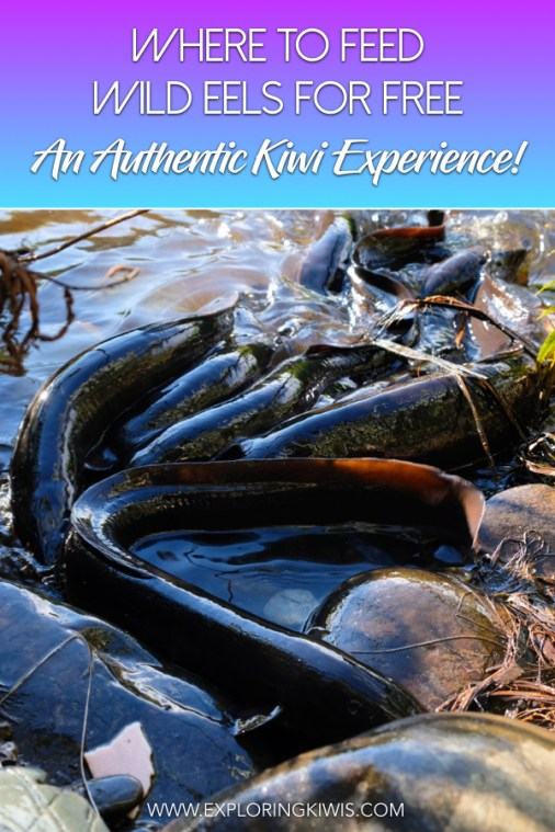 New Zealand is home to an amazing freshwater fish - the eel! We've got just the spot for you to feed these intriguing creatures for free in the South Island of New Zealand. Don't miss your chance to get up close to these guys on your trip to Aotearoa!