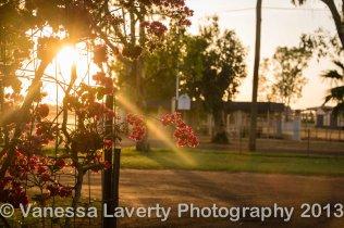 Sunrise through the bougainvillea