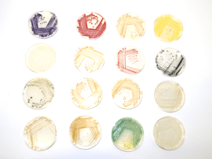 C-MOULD's full palette of pigmented bacteria.