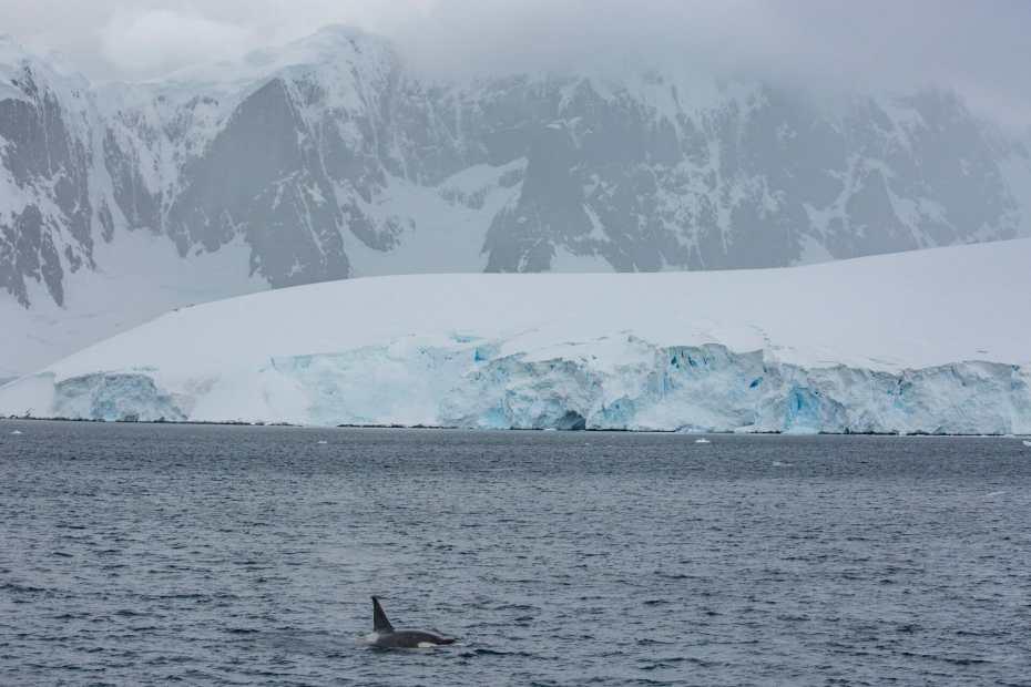 2016 4Deserts Antarctica. Photo: Myke Hermsmeyer