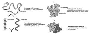 Amino acids and proteins « exploringtheworldofbiochem