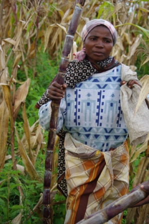 gift of sugar cane