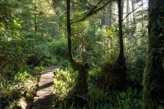 wildside trail - walk the wildside