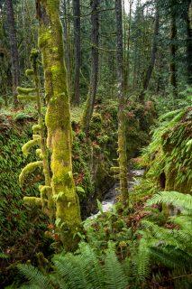 Thistle Mine Christie Falls Camus Ridge