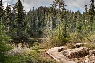 Paradise Meadows to Wood Mountain/Forbidden Plateau
