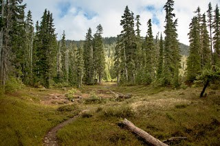 Approaching Arnica Lake, Hiking to Mount Phillips Vancouver Island