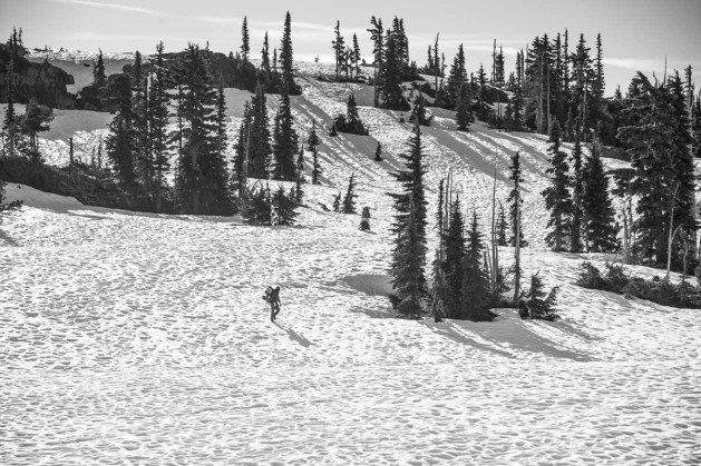 the white hot intensity of the early morning sun created an impossible lighting situation on our way to Rees Ridge
