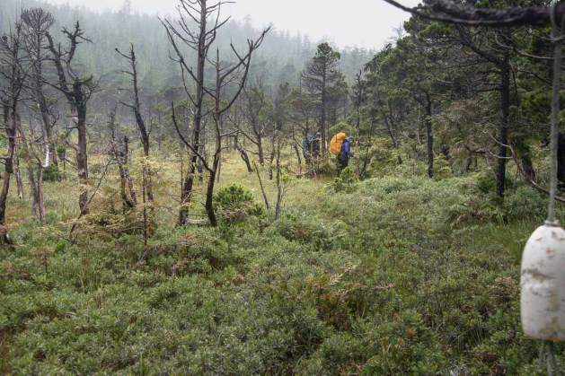 A wet crawl through the flats between Lowrie Bay and Sea Otter Cove