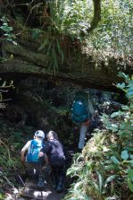 hiking the Wilde Side Trail, Flores Island