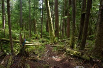 hiking Lone Cone, hiking on Vancouver Island, Meares Island
