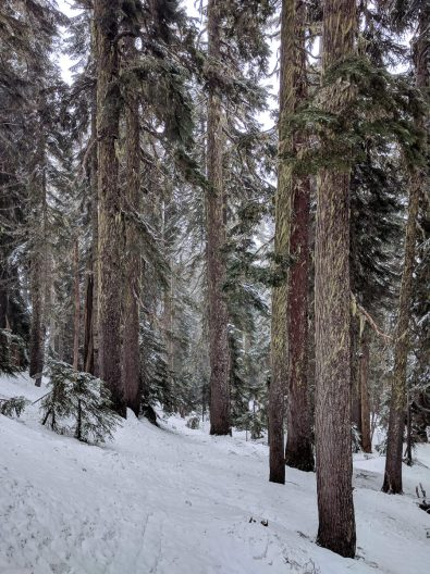 a view through snow covered trees on the slopes of Mount Elma in Strathcona Park