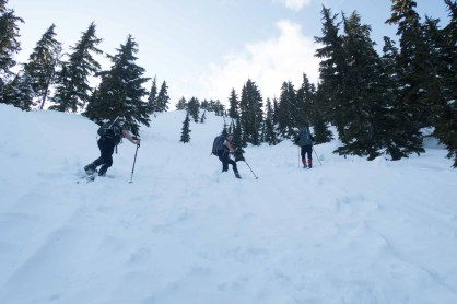 the final push to the summit of Tyee Mountain, hiking in Strathcona park