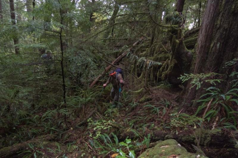hiking to Mount Maitland on Vancouver Island